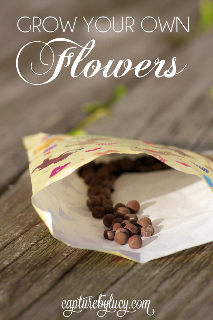 Grow-Your-Own-Flowers.jpg