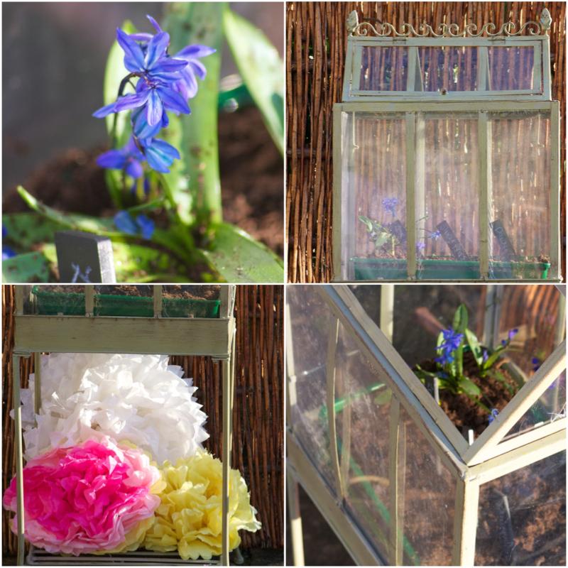 Planting Flowers Blooms.jpg