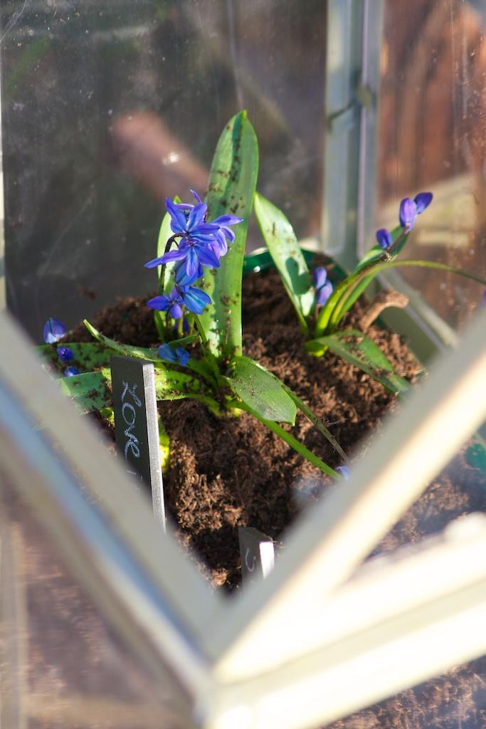 Planting Flowers.jpg