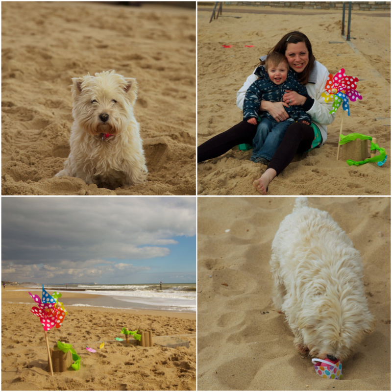 Beachegghunt.jpg