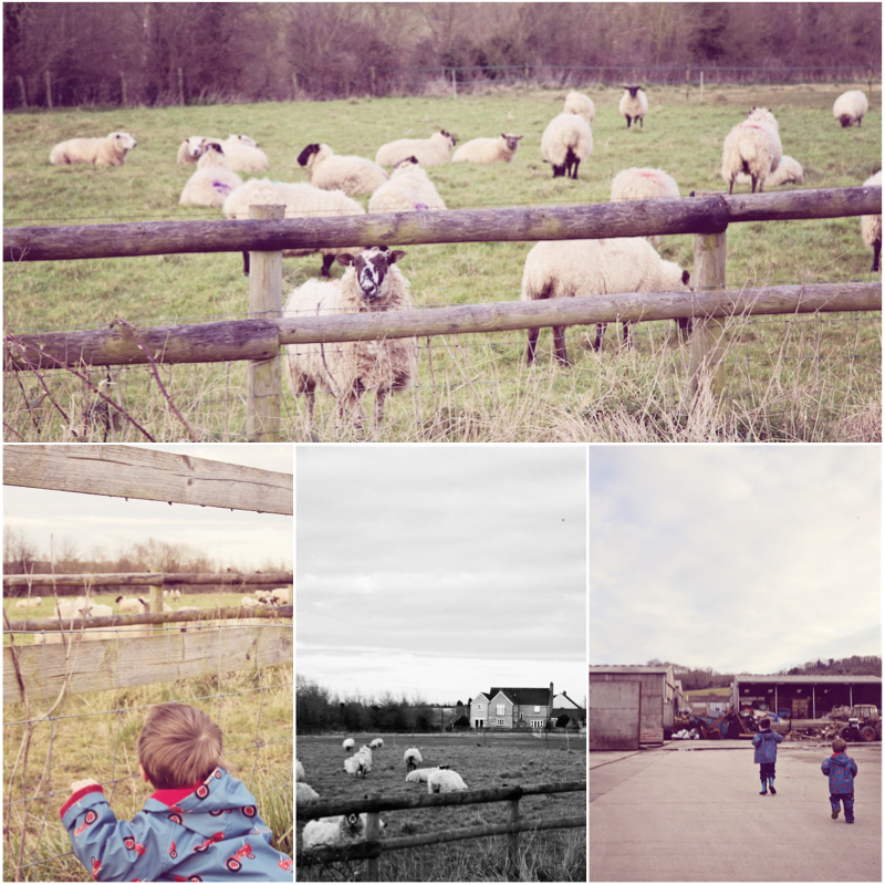 CountryLife.jpg