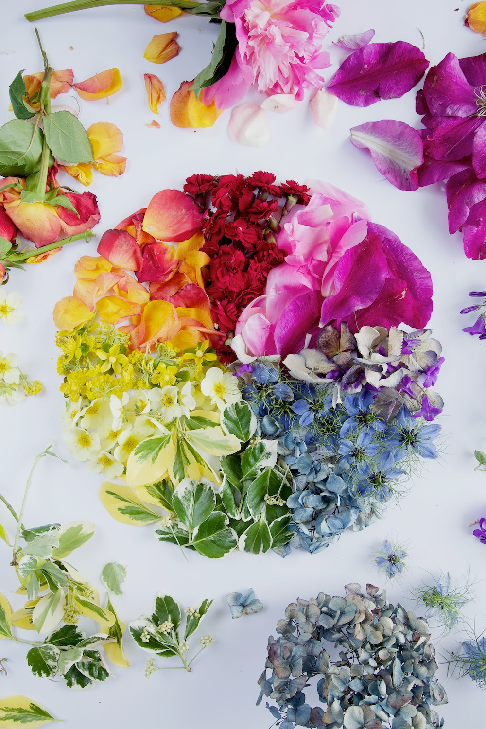 Floral Colour Wheel