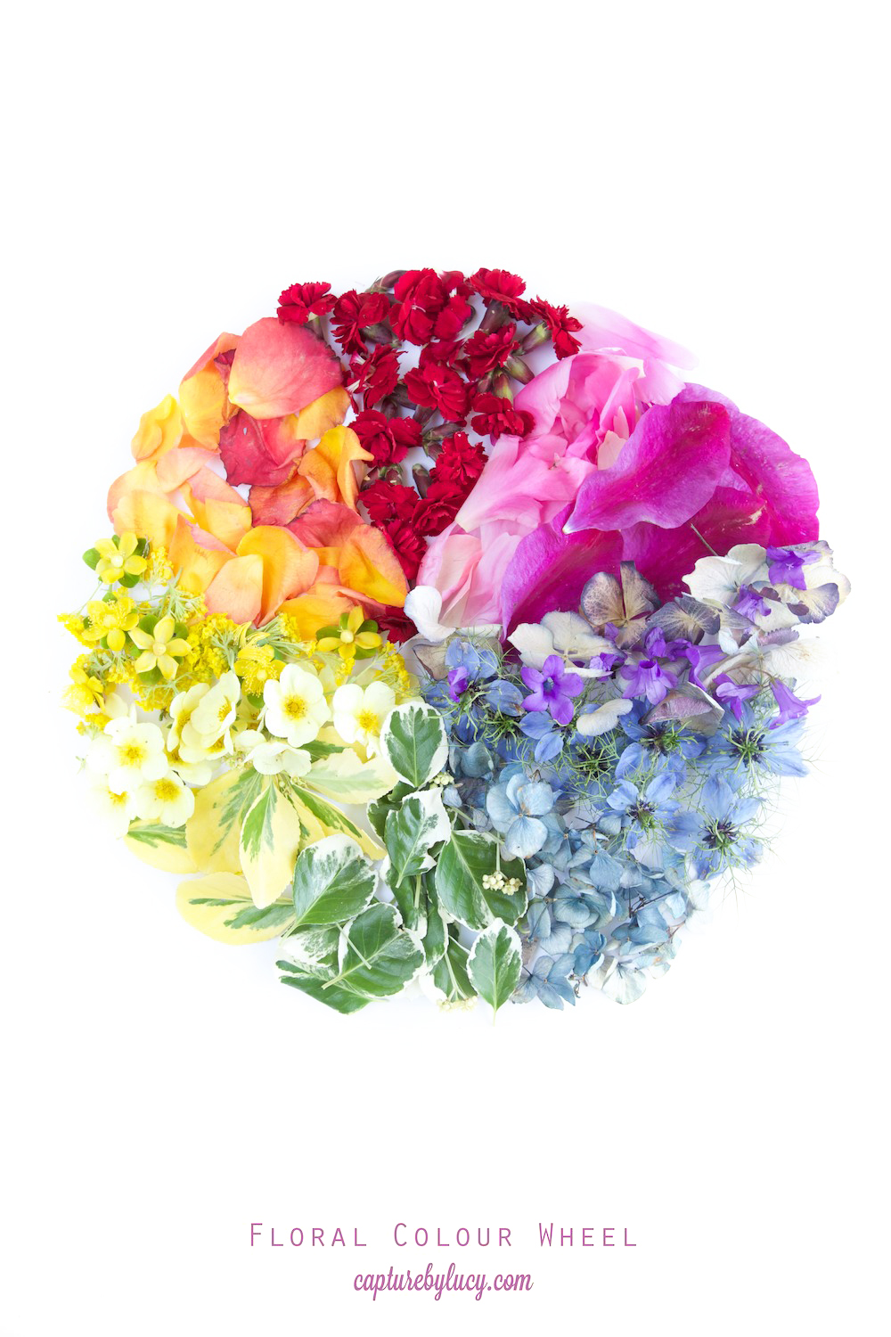 Floral Colour Wheel.jpg