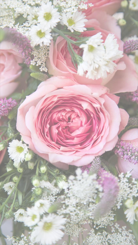 rose phone wallpaper
