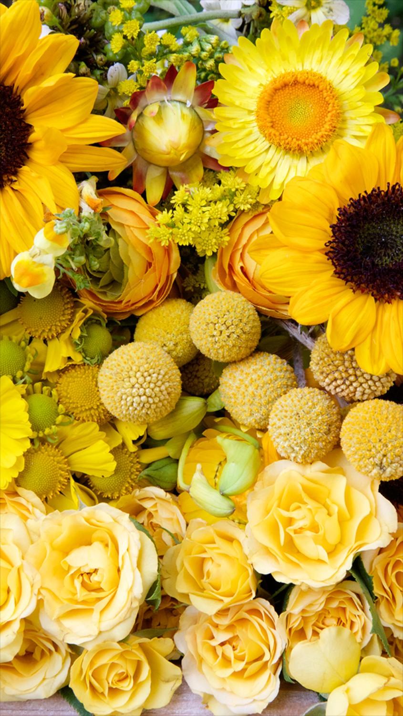 yellow flower phone wallpaper