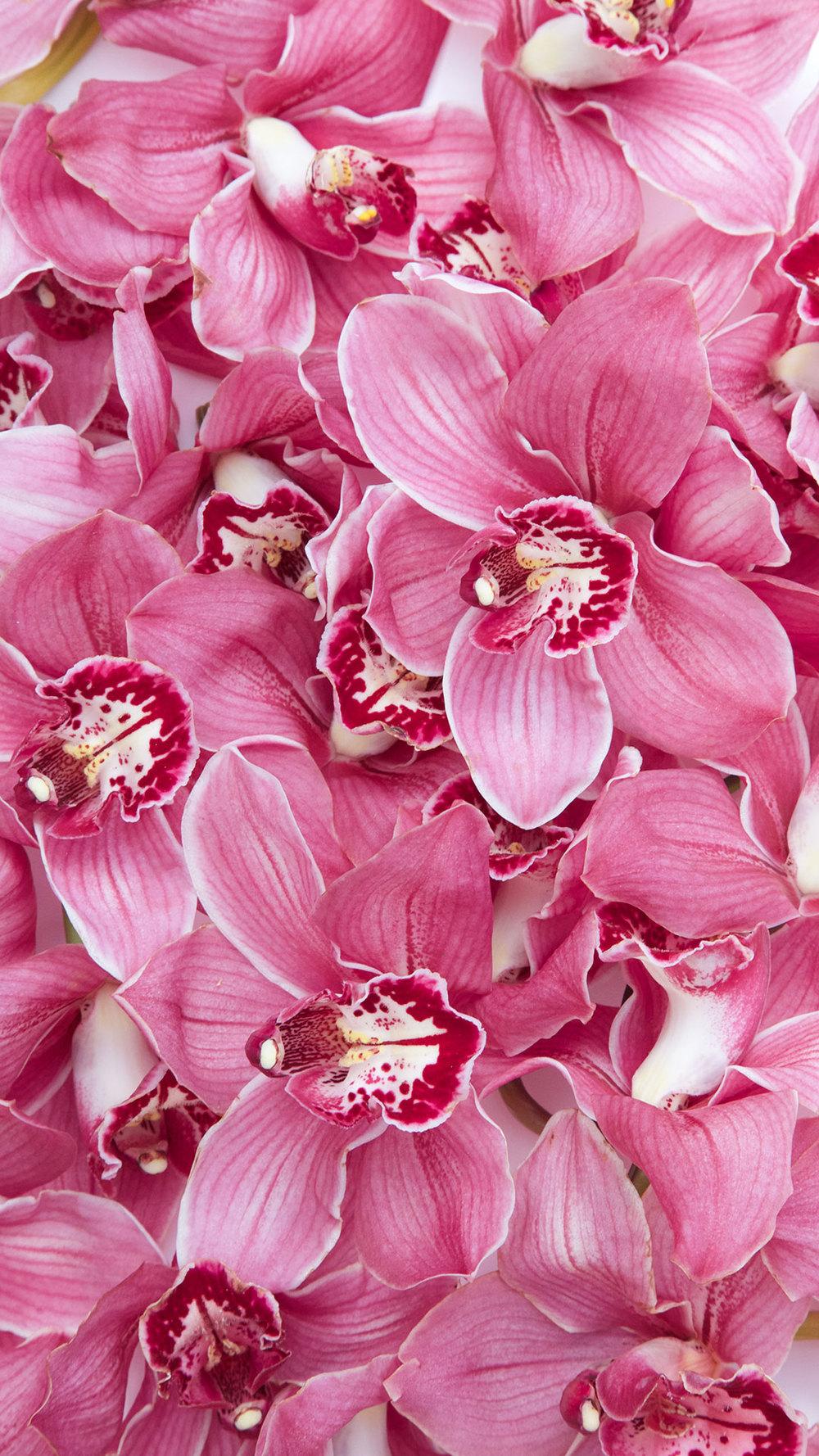 free floral wallpaper