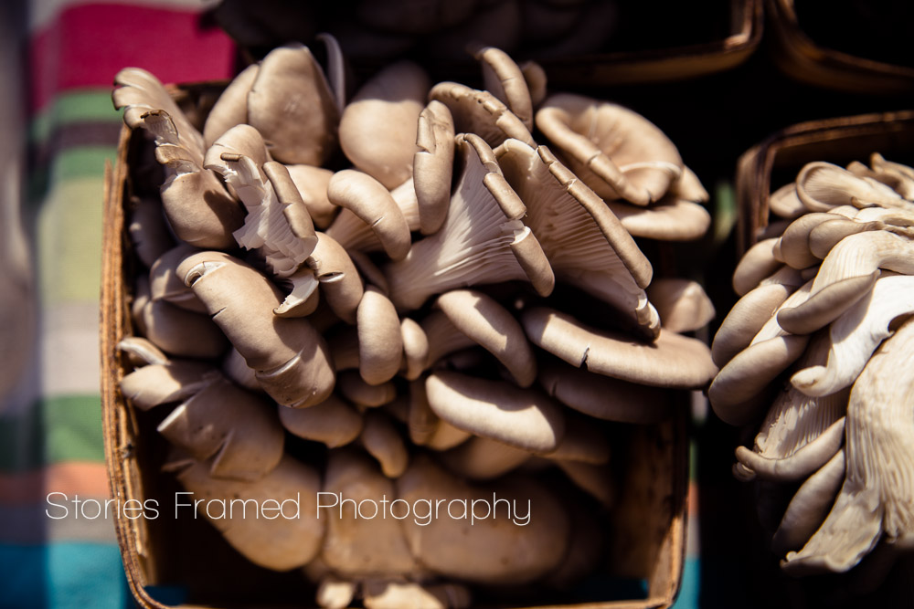 Stories Framed Photography | Tosa Farmers Market | mushrooms | fungi