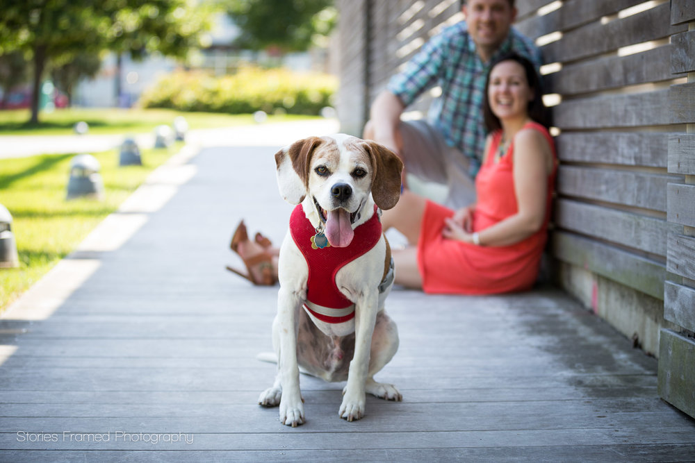 Pets are members of your family and welcome to join family portraits!