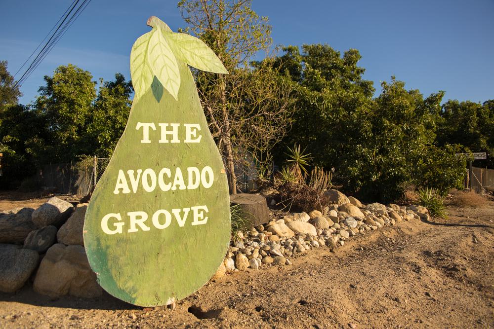 The Avocado Grove!