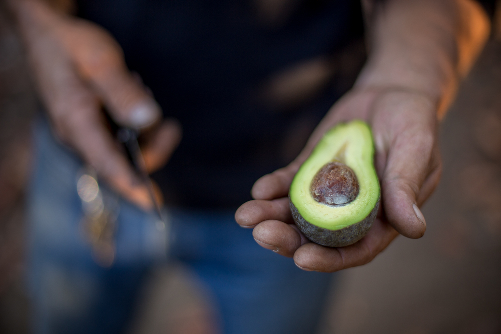 Avocado Farm-29.jpg