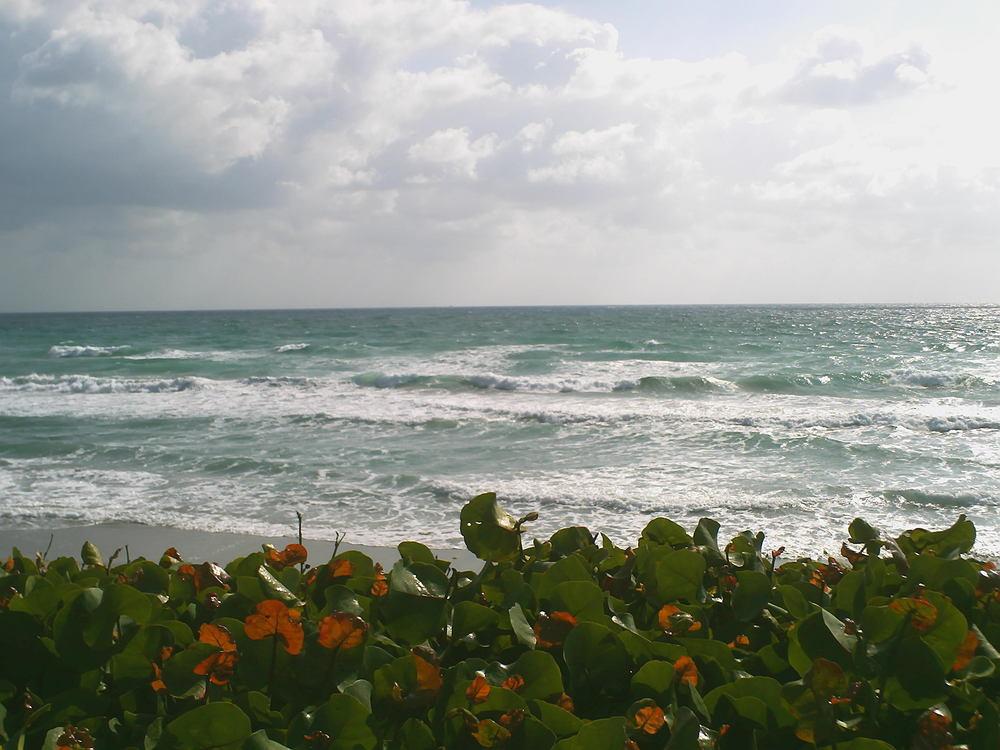 Seminole 14 Ocean.JPG