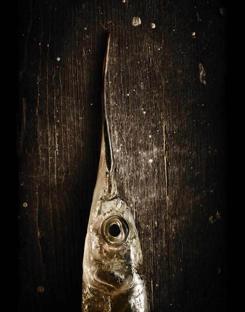 Garfish head web.jpg