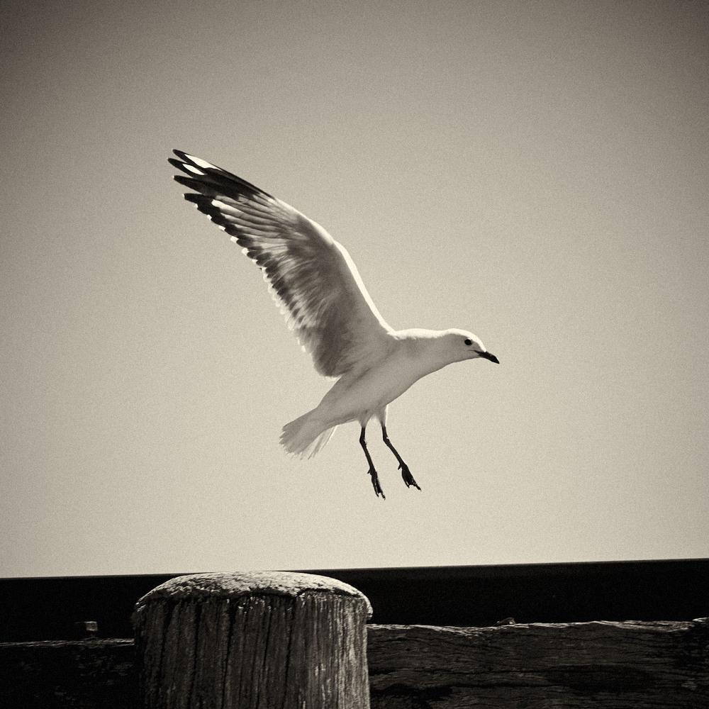 Seagull-01.jpg