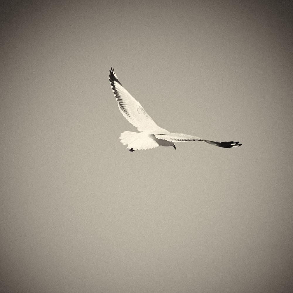 Seagull-03.jpg