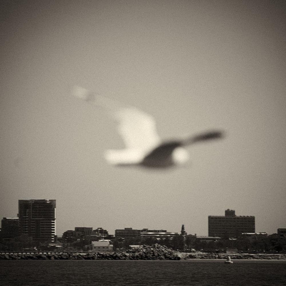 Seagull-04.jpg