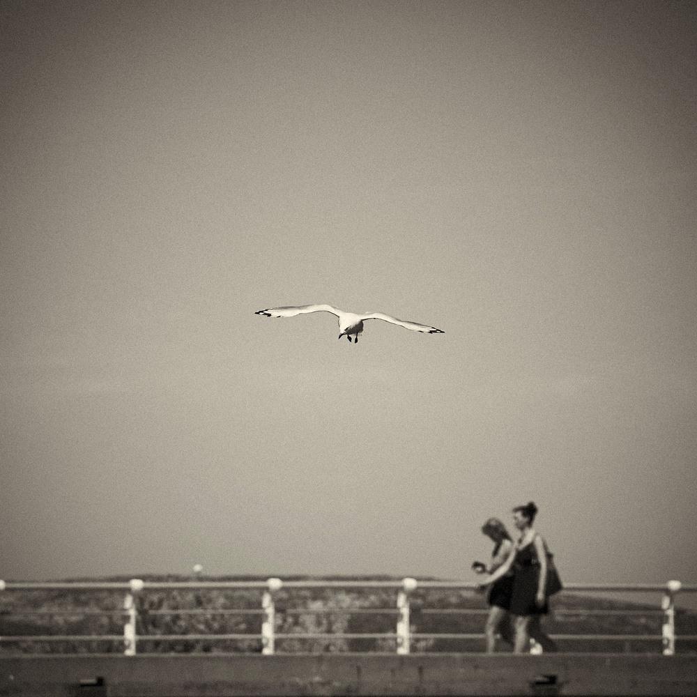 Seagull-05.jpg