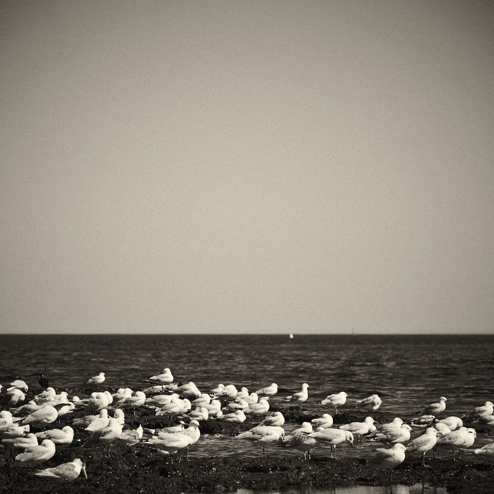 Seagull-06.jpg