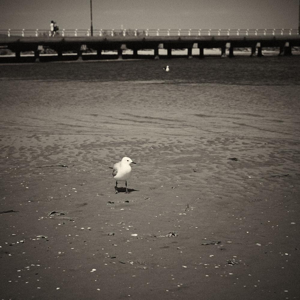Seagull-07.jpg