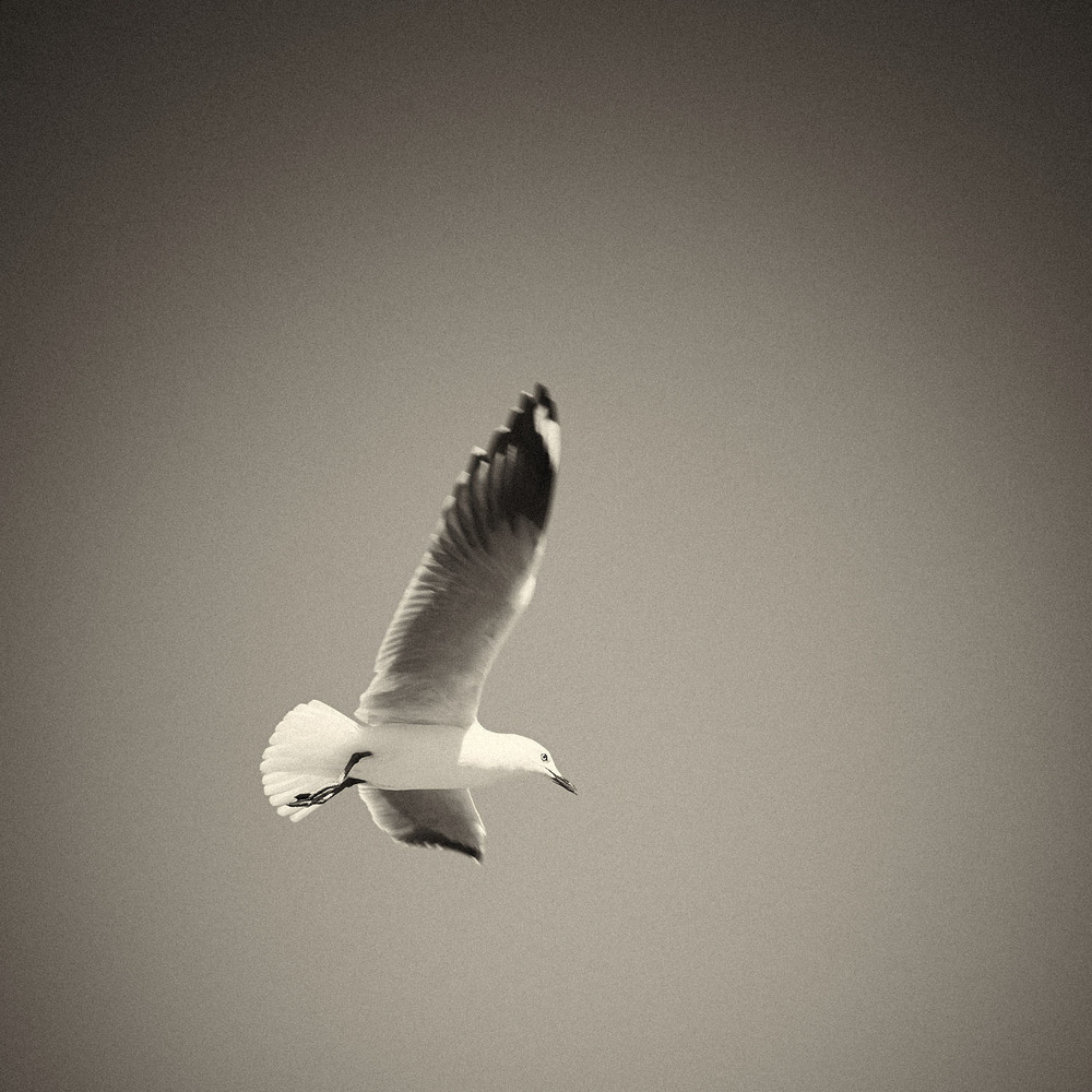 Seagull-08.jpg