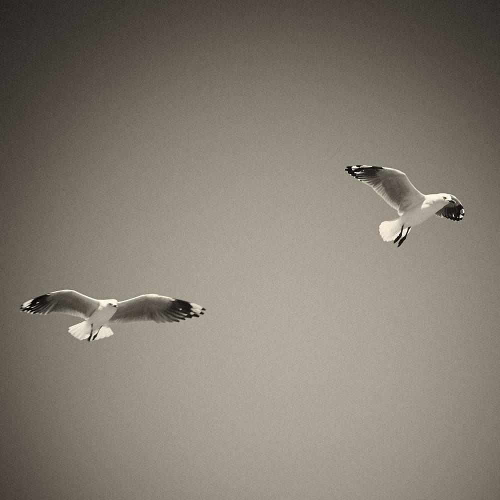 Seagull-09.jpg