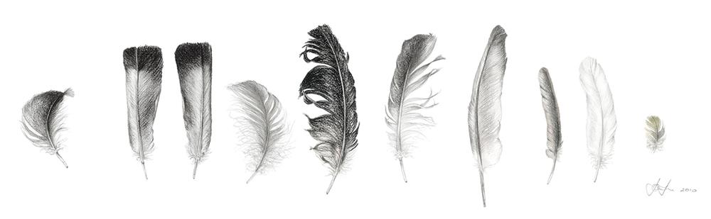 Feather Sentence 3.jpg