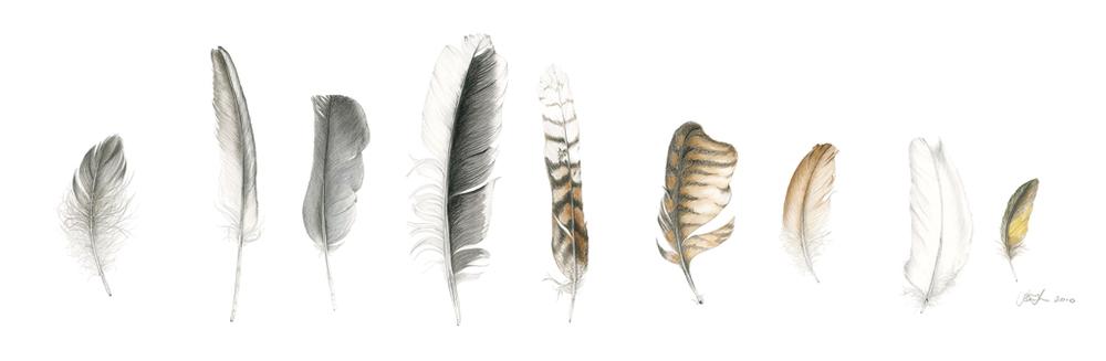 Feather Sentence 1.jpg