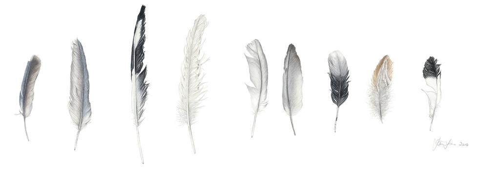 Feather Sentence 2.jpg