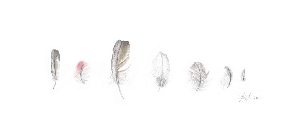 Feather Whisper.jpg
