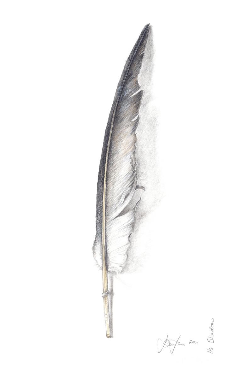 Gannet Wing Feather, Its Shadow.jpg