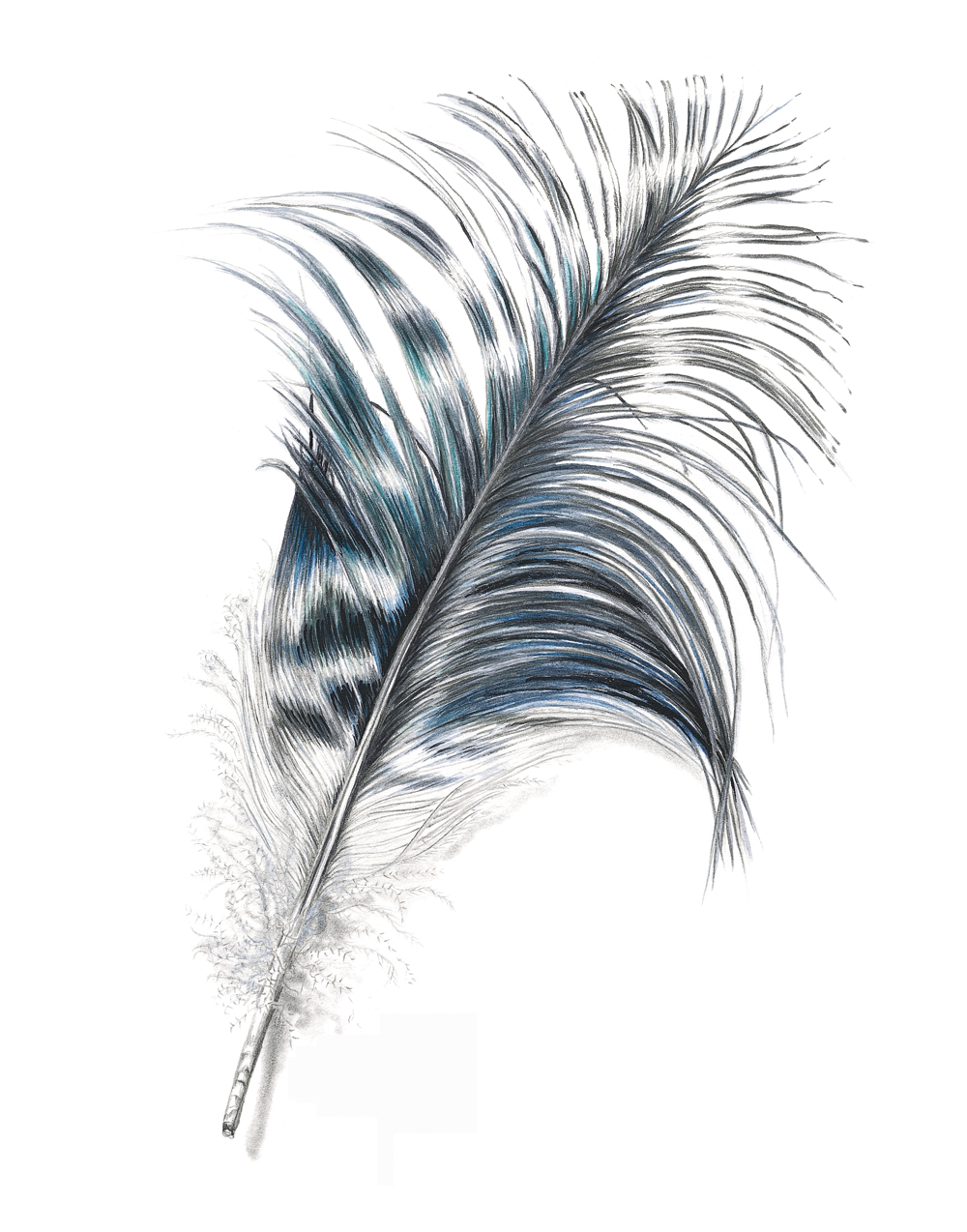 Ibis wing Feather.jpg