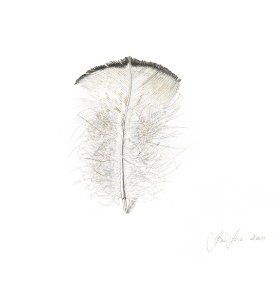 White peacock tail feather small.jpg