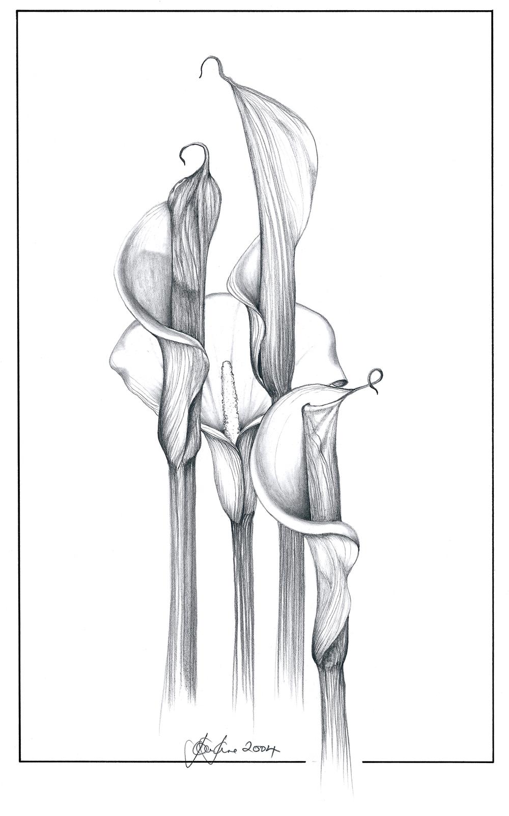 arum lilys.jpg