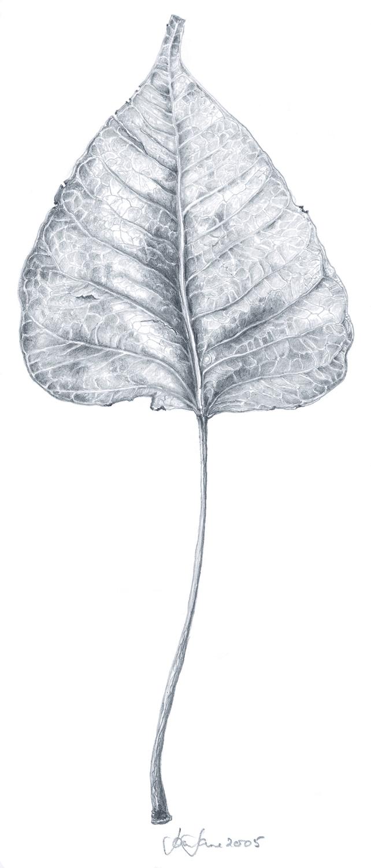 elm leaf.jpg
