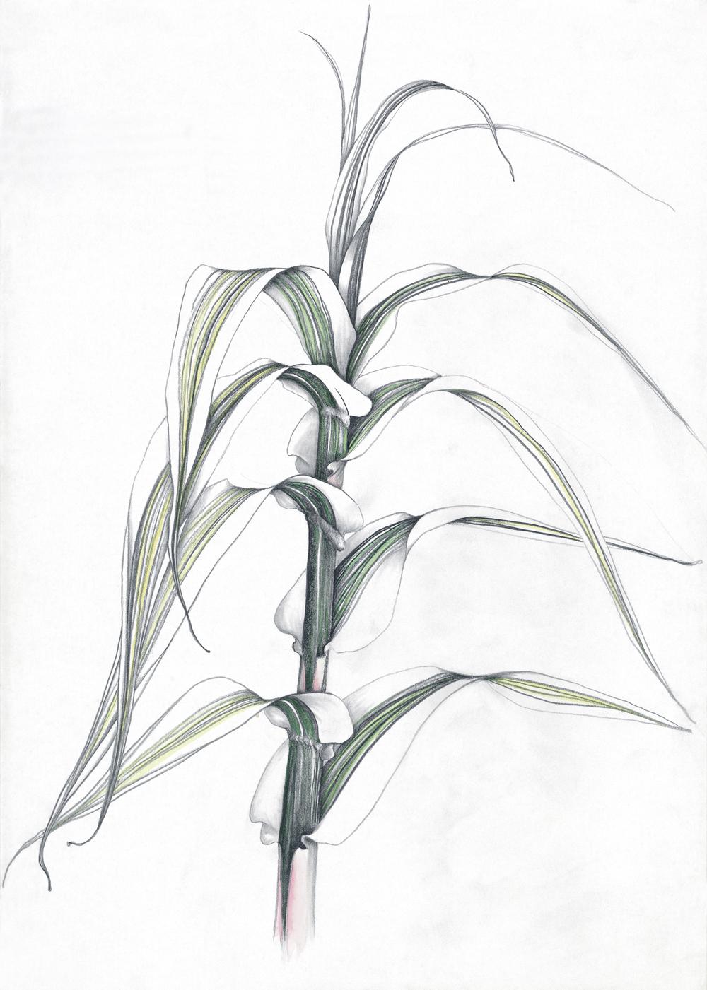 bamboo top.jpg