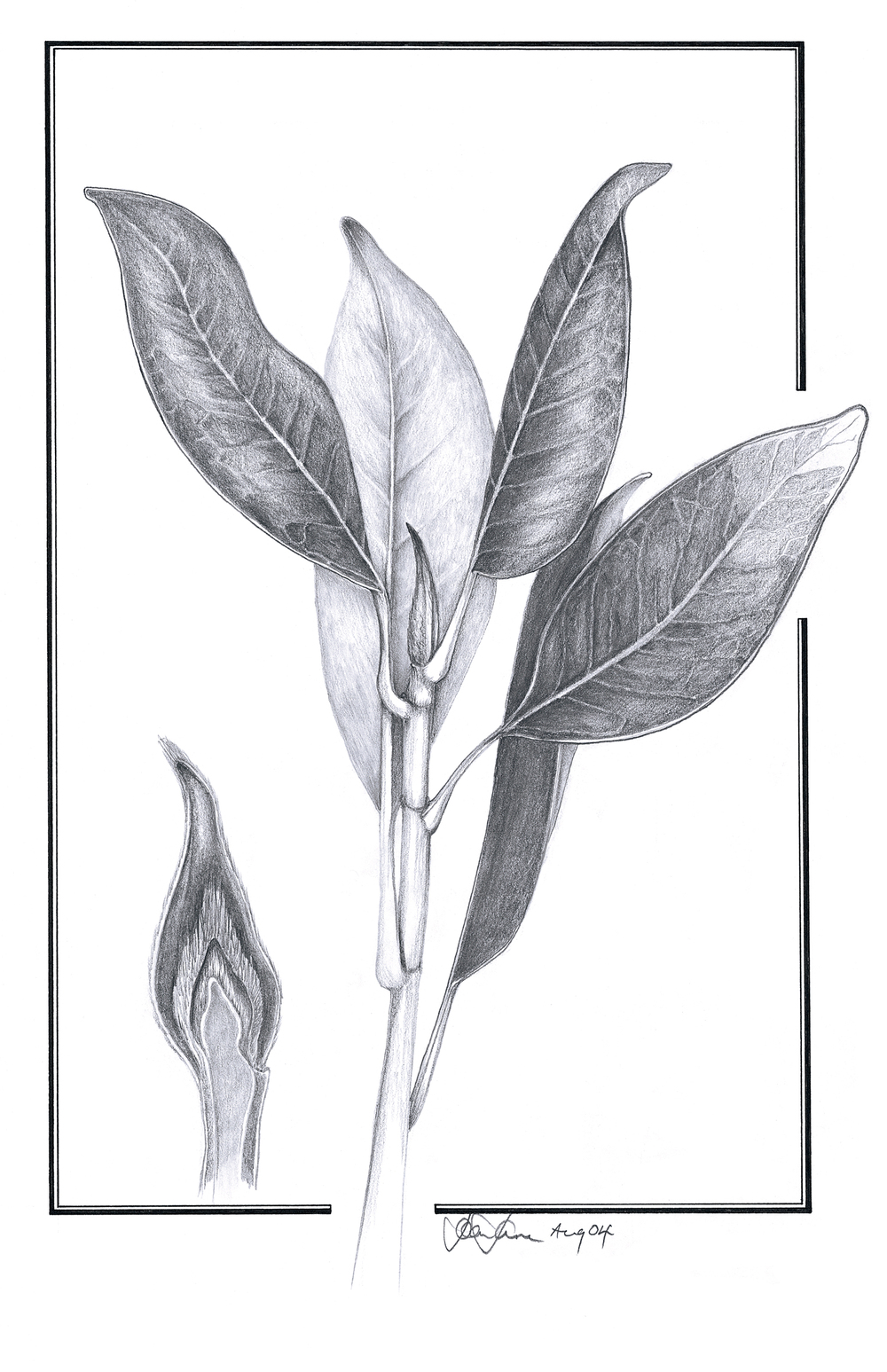 grandiflora leaves.jpg