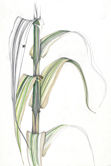 bamboo base