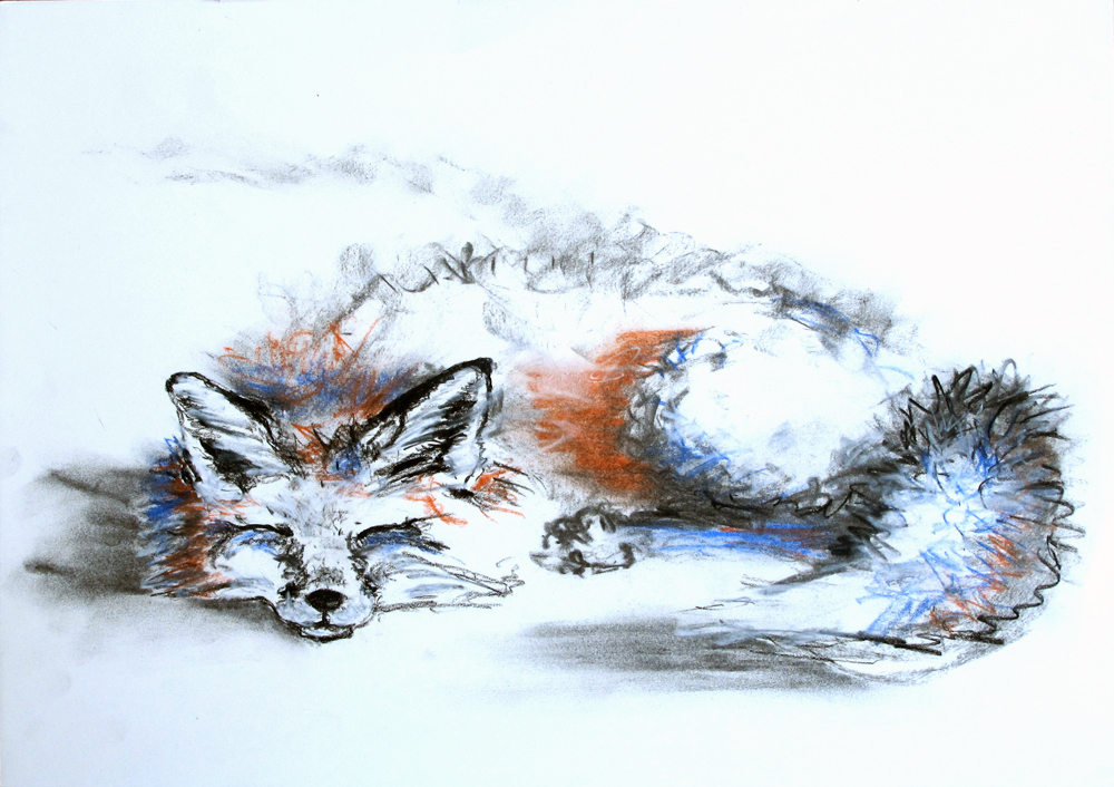 'Sleepy Fox'