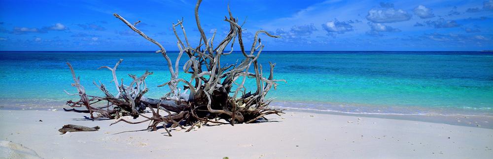 driftwood-1500.jpg