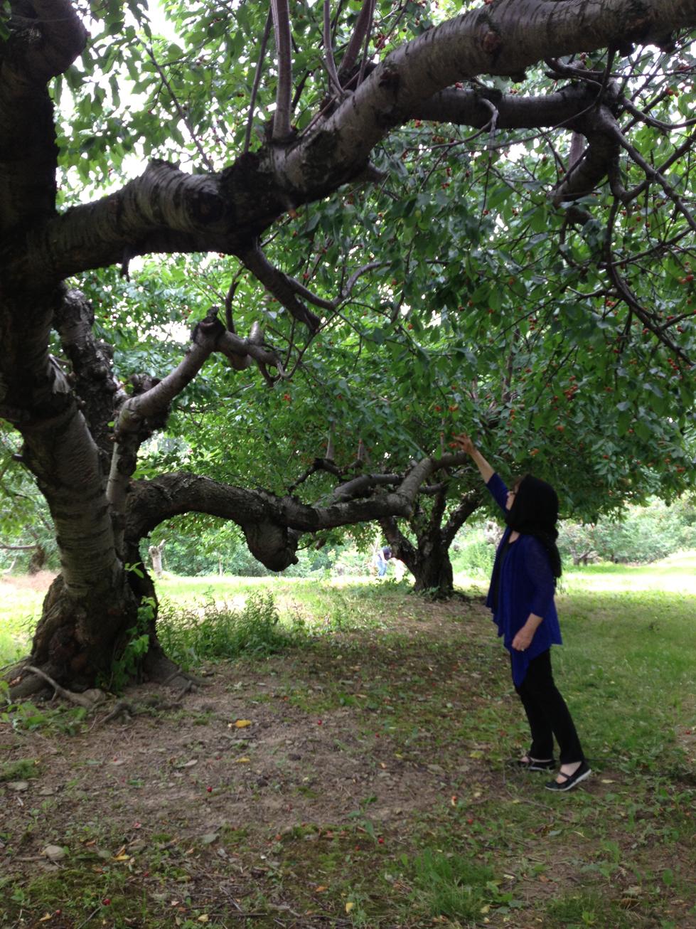 paula tree 2.jpg
