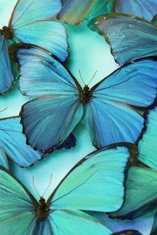 Alexandra de Curtis teal butterflies