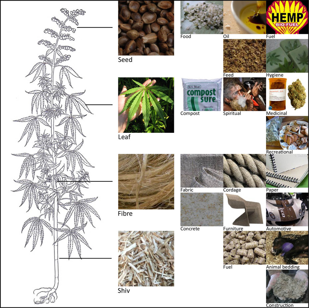 A few of the thousands of uses of hemp figure 2 - see references page