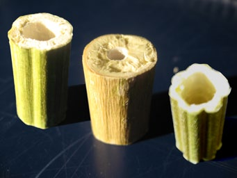 Much like bamboo, the stalk's hollow core reduces waste growth while maximizing its diameter