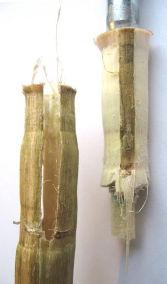 The results show that hemp stalk can take a much larger load in tension compared to compression