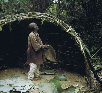 An Ituri Pygmy building a shelter of thin saplings bent and tied with bark strips figure14 - see references page