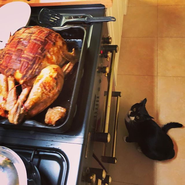 The cat would like to offer his assistance in consuming this turkey #christmas #cat #catsofinstagram #christmascat #christmascats #cats #turkey #turkeyday