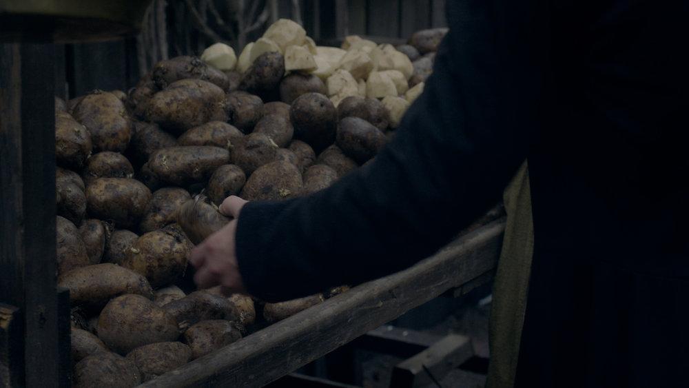 the irish potato famine -