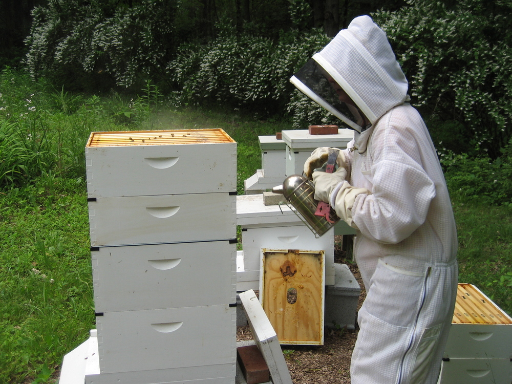 Bee 101: Meeting the Bees & A Honey of a Cocktail ...