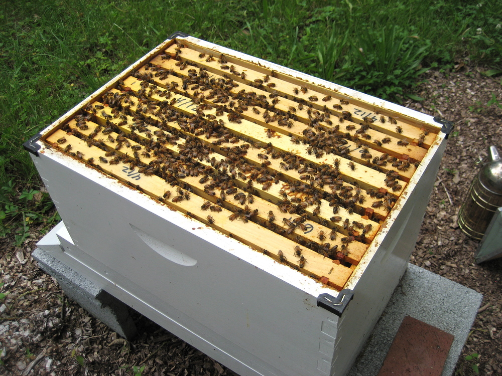how to build honey bee frames