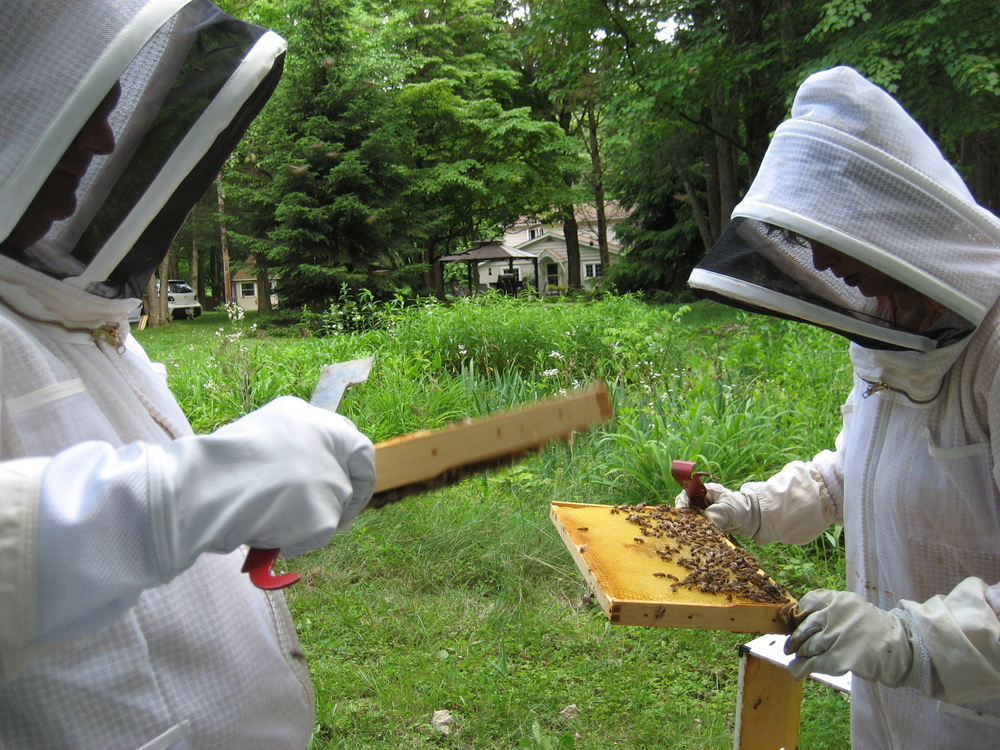 Laura and fellow beekeeper, Dan Boylan search a hive for the queen bee.