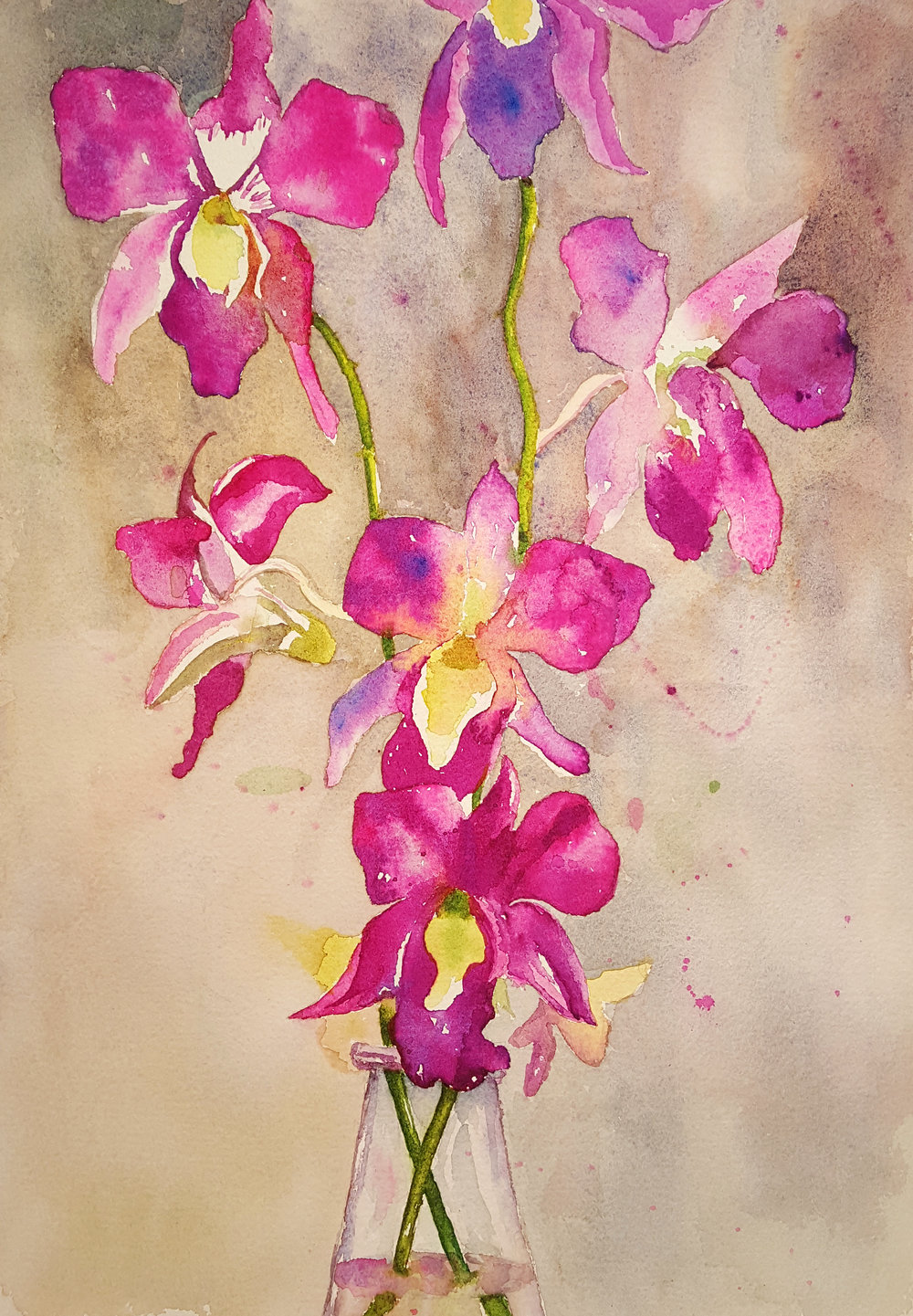 Heather's Orchids